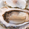 Lobbying for Bivalves
